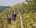 Francuska vinarija